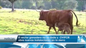 Noticia Mas TV Huelva